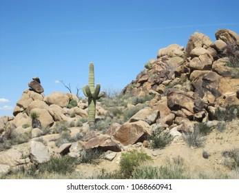 Cactus among the rocks
