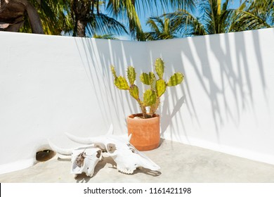 Cactus and animal skulls inside a stylish Mexican Villa