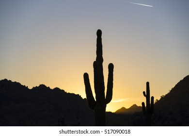 A cactus in the Arizona desert against a blue sky