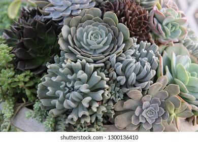 cactus background texture pattern, close up image of a cactus bush wallpaper