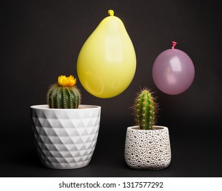 Cactus with balloons