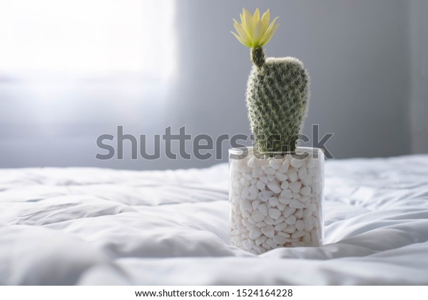 Cactus Bedroom Morning Light Stock Photo Edit Now 1524164228