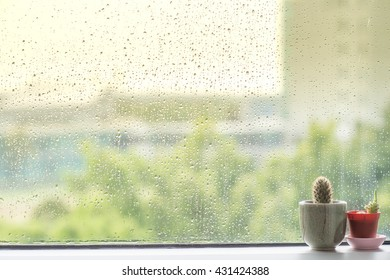 Cactus behind water drops of rain on a window glass