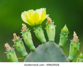 Cactus Bloom
