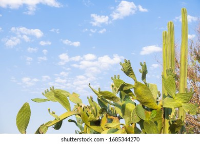 Cactus and blue sky outdoors