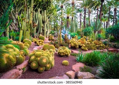 Cactus in the Botanical Gardens of El Huerto del Cura in Elche near Alicante in Spain.