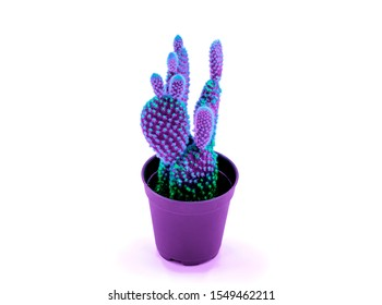 cactus with bunny ears shape neon light trendy style minimal in pot above white background tropical desert flower fantasy color leaf texture with a beautiful pattern of thorns for home decorative idea