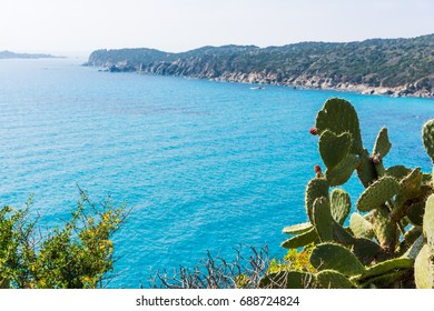 Cactus by the sea in Sardinia, Italy