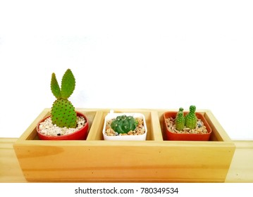 cactus or cantus pot in wood box and white background