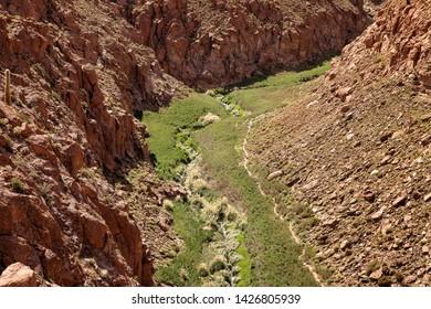 Cactus Canyon with small river and green grass near San Pedro de Atacama in the Atacama Desert, northern Chile, South America