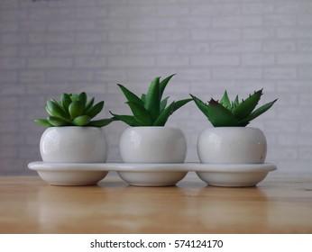 Cactus ceramic pots for decoration