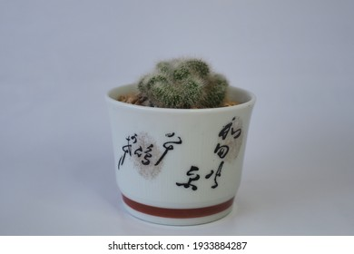 Cactus in the Chinaware pot, Chinese letters style.