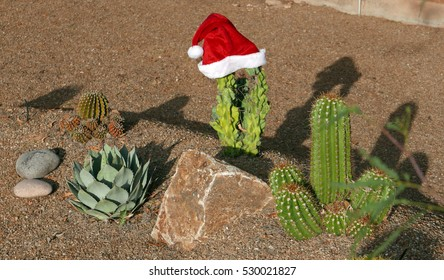 Cactus with Christmas hat