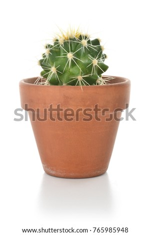 Cactus in a clay pot houseplant isolated on white background.