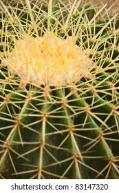 cactus close up