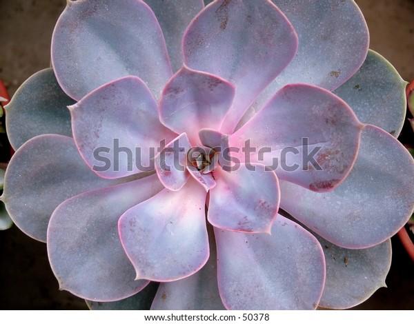 cactus - close up