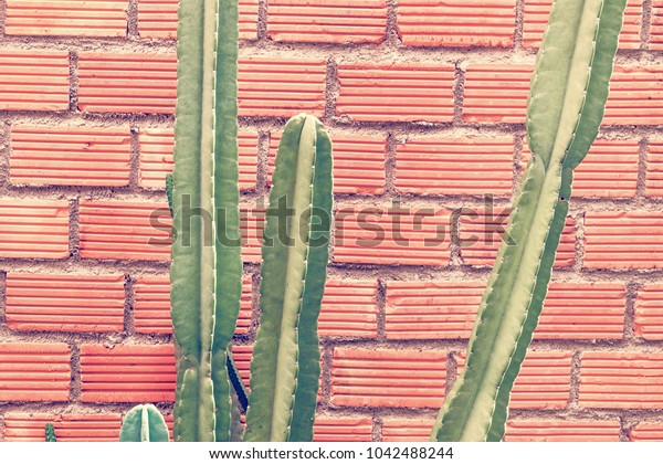cactus close up on red brick background.