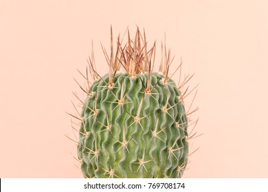 cactus closeup on brown background
