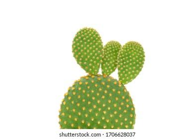 cactus close-up on white background