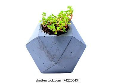 Cactus in concrete pots on a white background