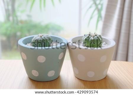 Cactus Cute Polka Dots Pots Stock Photo Edit Now 429093574