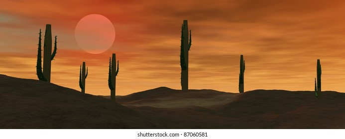 Cactus in the desert by cloudy sunset