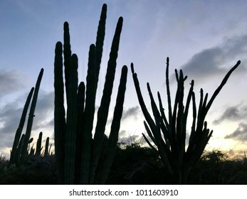 cactus desert in the Caribbean Island Aruba