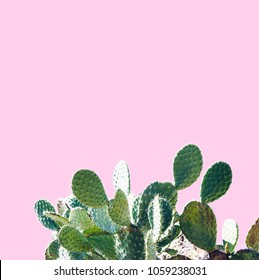 Cactus  Design. Minimal Stil life. Trendy Bright different colors.  Unusuall Background or wallpaper design