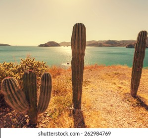 Cactus fields in Mexico,Baja California
