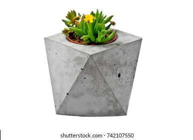 Cactus with flower in concrete pots