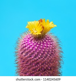 Cactus with flower. Minimal Fashion. Art gallery. Trendy Pink Color. Fun Summer Mood. Creative Sweet Style.