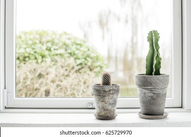 Cactus in flower pots in a bright window with a green garden outside