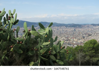 Cactus in foreground of Barcelona cityscape at Montjuïc Castle in Spain