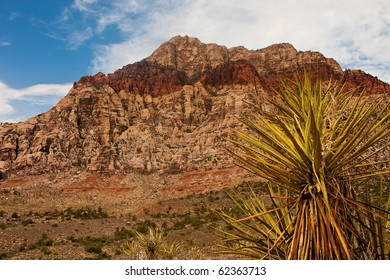 A cactus in the foreground with mountain in background