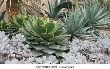 cactus fower closeup sumer plant