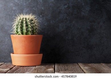 Cactus in front of classroom chalk board. Back to school concept with copy space