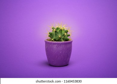 Cactus front view in purple ceramic pot Fashion Design. Cacti Minimal summer still life concept. Trendy Bright Color. Green neon Mood on ultra Violet background.