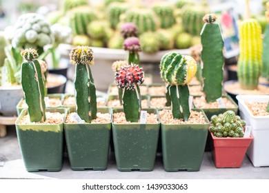 The cactus in the garden