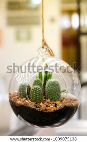 Cactus Garden Bottle Terrarium Stock Photo Edit Now 1009075138