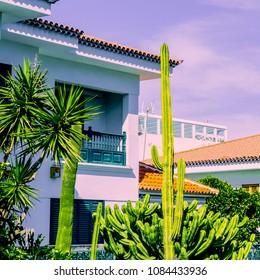 Cactus. Cactus Garden.  Canary Island Love Plants