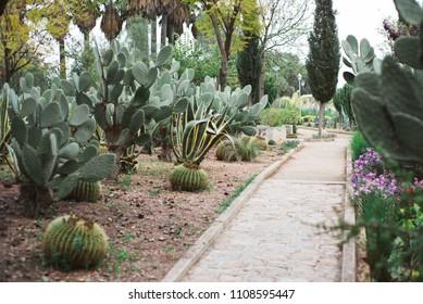 Cactus Garden Path, Fez, Morocco