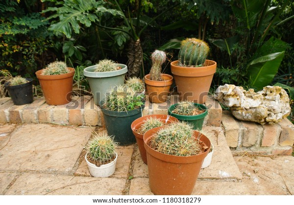 Cactus Garden Succulent Nursery Cultivation Display Stock Photo