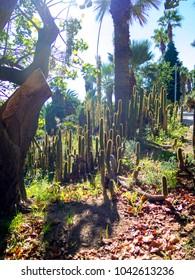 Cactus garden under the sun, in Barcelona