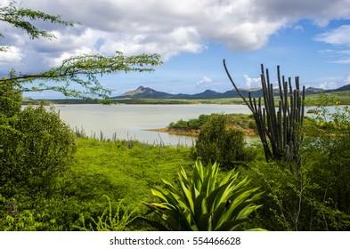 Cactus - Goto meer - Bonaire