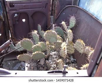 cactus growing in old rusty car