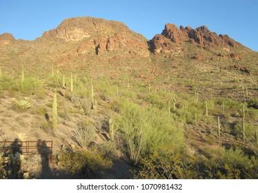 Cactus growing on Vulture Peak