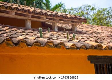 Kakteen wachsen auf einem Dach aus dem Haus in der Region an der Karibikküste Kolumbiens wild.