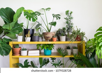 Cactus with houseplants in room. Home decor and tree lover concept