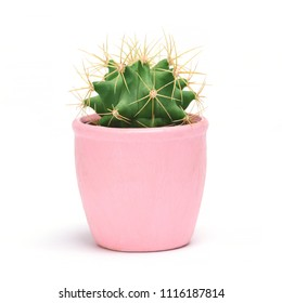 Cactus isolated with clipping path. Closeup Cacti front view in pink ceramic pot on white background. Collection.