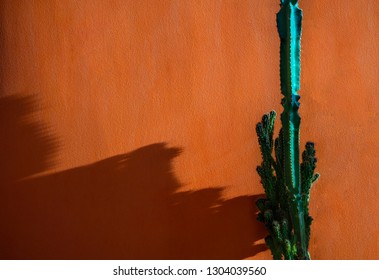 Cactus isolated on orange background